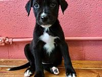 Blanche's story This 10 week Lab/Catahoula mix is ready
