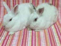 My name is Blanchette (I'm on the left) and my husbun