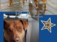 Meet Blaze, the sweetest and most loyal pup. Blaze is a