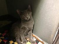 Blaze's story Playful, outgoing and friendly. Loves to