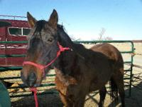 We rescued this horse on 2/12/12 from Yoder Colorado.