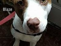 Blaze's story Hello- My name is Blaze and I am good