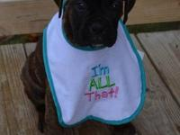 Blazin' Boxers has pups coming soon. AKC registered and