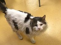 Bleau's story Bleau Age: 3 years old DMH/neutered male