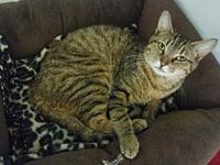 Bliss's story DSH 3 yr. Spayed Female Brown Tabby Mix