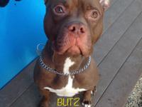 Blitz is a happy go lucky, energetic, playful boy who