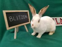Blitzen and his siblings were rescued a few days before