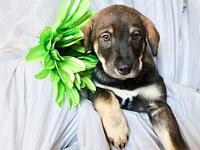 Blitzen (Taya Pup )'s story Blitzen is a pup from the