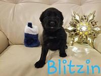 Blitzin's story     Thank you for checking