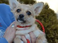 Blondee is a six month old, owner surrendered puppy who