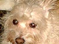 BLONDI's story BLONDI WAS RESCUED AND NOW SHE IS A