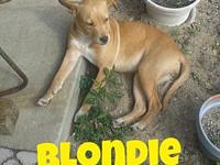 Blondie's story Please understand we must conduct home