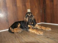 We have new puppies for sale- Three male and Three