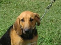 Bloodhound - Trusty - Large - Young - Male - Dog What a