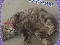 Blossom's story Blossom is around 1 yr old. Female, UTD