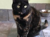 Blossom is a stunning two year old Tortie with dark