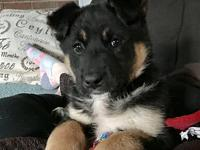 Blossom's story Meet Blossom! She is a Shepard mix,