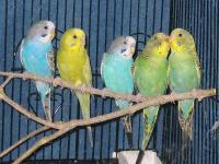 *******ONLY AVAILABLE AT TUCAN PETSHOP***********