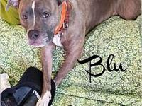 Blu's story *** COURTESY LISTING *** PLEASE CALL OR