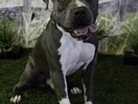Blue's story BLUE WAS NEUTERED AT HSOY CLINIC ON