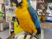 Hey there, I'm Co nah the Macaw. I'm delicately