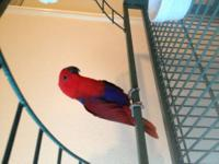 I have a 8 or 9 year old male macaw for sale. He is old