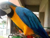I have BLUE AND GOLD MACAW ready for new home, 16