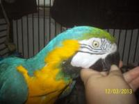 15 years of age Blue and Gold Macaw named Max. DNA