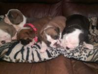 I have 2 males and 1 female in need of a good home,
