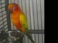 I have had this bird in my aviary with my cokcatiels.