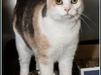 BLUE's story $97.50 FEE INCLUDES: neutering/spaying,