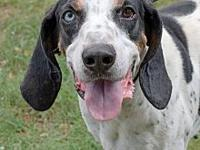 Blue Eyed Willie's story Ohio Hound Rescue and Three