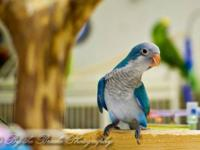 I have a sweet handfed Blue Front Amazon Female for