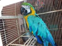 I have a seven year old macaw he is a male he talks and