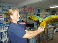Large Blue & Gold Macaw needs new home. We don't have