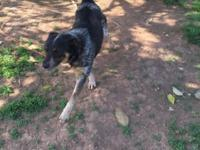 Rose is a 2 year old blue heeler mix. We would like to