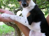 We have 4 heeler puppies left for sale They are out of
