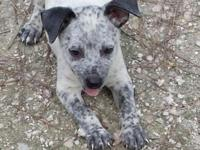 We have 2 heelers left. 1 male and 1 female available.