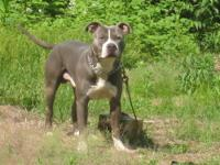 i Am selling my 4 yr old non nutered male blue nose