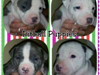 4 women for sale. Turn 4 weeks old on February 4th.