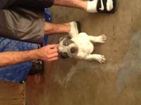I have 6 remaining blue nose pitbull puppies 4 sale (1