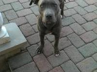 4month 22 days old pitbull puppy named Diesel . Very