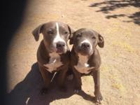 I have a pair of young pitbulls. One male and one