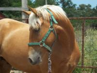 Several quality MFT horses offered for sale at this