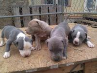 i have eight beautiful pups, they are gotti and nemesie