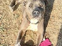 Blue's story Please contact Isabell