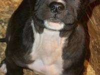 NEW LITTER BORN MAY 10, 2012. Call PHILIP . DEPOSITS