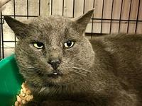 Blue's story Blue is FIV/Felv positive. He also has no