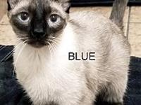 Blue's story Blue is a sweet boy. He is very shy at