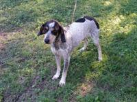 I have a 3 year old Blue Tick i would like to rehome. I